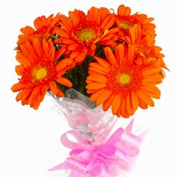 Send Fresh Six Orange Gerberas Hand Bunch Online