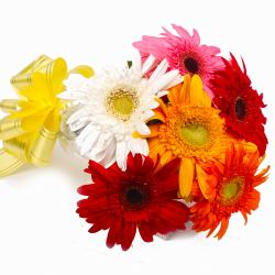 Six Mix Color Gerberas with Cellophane Packing