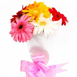 Six Multi Color Gerberas with Tissue Wrapping