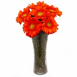 Six Stem of Orange Gerberas in Vase