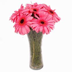 Six Stem of Pretty Pink Gerberas in Vase
