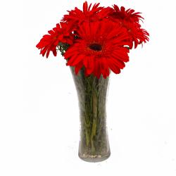 Six Stem of Refreshing Red Gerberas in Vase