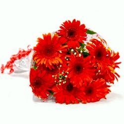 Ten Beautiful Gerberas Bouquet