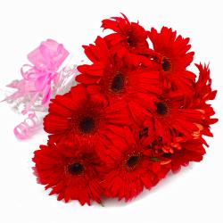 Ten Red Gerberas Bunch with Cellophane Packing