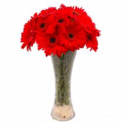 Ten Red Gerberas in Classic Vase
