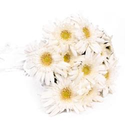 Ten White Gerberas Hand Tied Bouquet