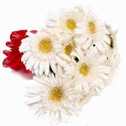 Ten White Gerberas with Tissue Wrapping
