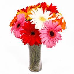 Twelve Colorful Gerberas in Classical Vase
