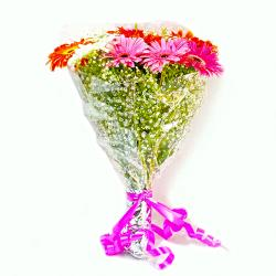 Twelve Mix Color Gerberas Hand Bunch