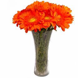 Twelve Orange Gerberas in Glass Vase