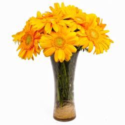 Twelve Yellow Gerberas in Glass Vase