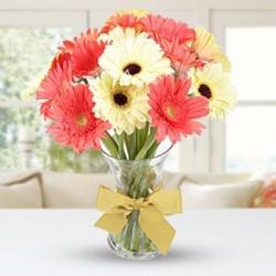 Twin Color Gerberas in Vase