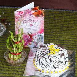 Vanilla Cake and Good Luck Plant with Birthday Card