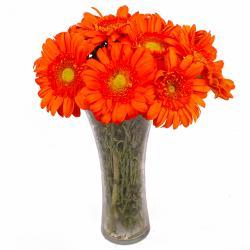 Vase of 10 Orange Color Gerberas