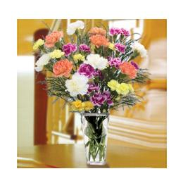 Vase of colorful Carnations