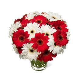Vase of red and white gerberas