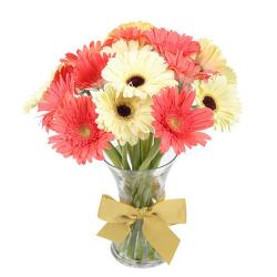 White and Pink Gerberas in Vase