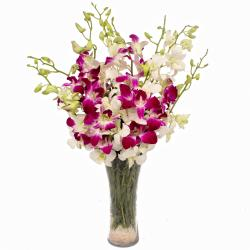 White and Purple Orchids Arranged in a Vase