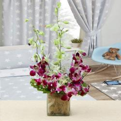 Charming Mix Colors Orchid in Vase