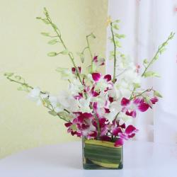 Mixed Orchids in a Glass Vase