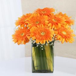 Orange Gerberas in Glass Vase