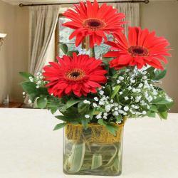Red Gerberas in Glass Vase